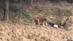 turista chino muerto en un zoológico