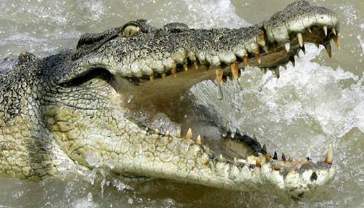Un surfista herido por un cocodrilo en Costa Rica