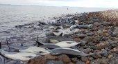 Aparecen 300 delfines muertos en las costas del Golfo de México