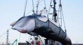 Japón retoma la caza comercial de ballenas después de 32 años |Foto: EFE vía El Confidencial