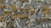 Valencia apuesta por el birdwatching para desestacionalizar
