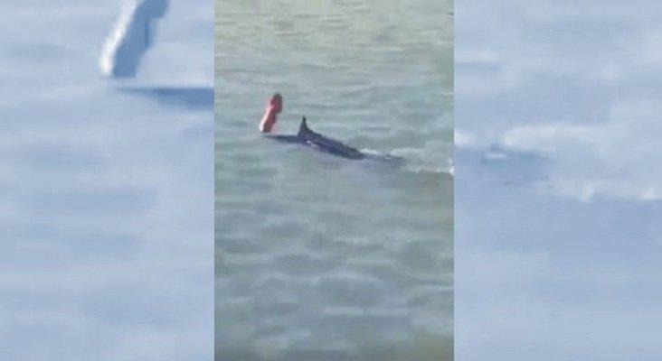 Muere un pez espada en Grecia tras ser acorralado y maltratado por turistas|Foto: Lanzan un objeto al pez espada