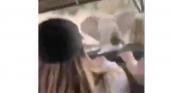 Elefante ataca a turistas en pleno safari por África