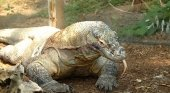 Indonesia ha puesto fecha al cierre de la isla de Komodo