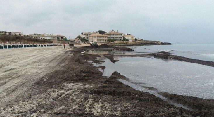 La retirada del 'sargazo español' en Mallorca crispa a los ecologistas | Foto: Conselleria de Medi Ambient i Territori vía Twitter