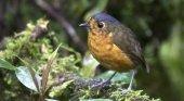 Colombia, región del mundo con más especies de pájaros