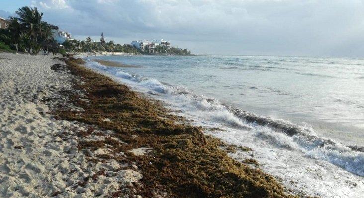 Hoteleros del Caribe mexicano exigen una reducción de impuestos por el sargazo   Foto: Turquesa News