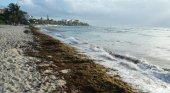 Hoteleros del Caribe mexicano exigen una reducción de impuestos por el sargazo | Foto: Turquesa News