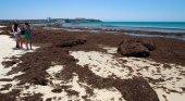 Andalucía lucha contra una invasión de algas asiáticas Foto: Junta de Andalucía