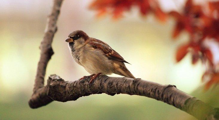 Alerta: el 'birdwatching' se queda sin pájaros