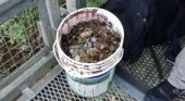 Retiran casi 100 kilos de monedas de las Cataratas del Iguazú |Foto: mdz