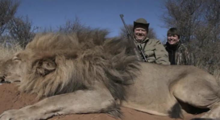 Indignación por la llegada de la caza 'low-cost': paga por un león y llévate una leona gratis