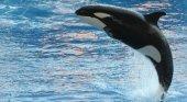 Cetáceos en SeaWorld Orlando