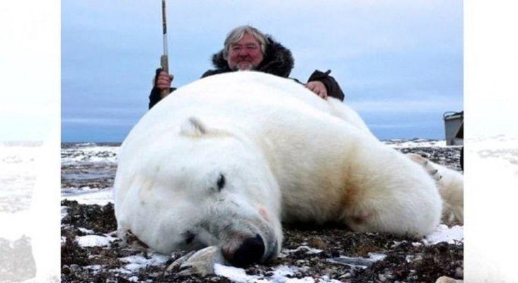 Los viajes de caza en el Ártico han acabado con 5.000 osos polares | Foto: MailOnline