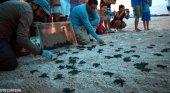 Acusan a Palladium de dañar nidos de Tortugas en Quintana Roo (México)|Foto: Radio Fórmula QR