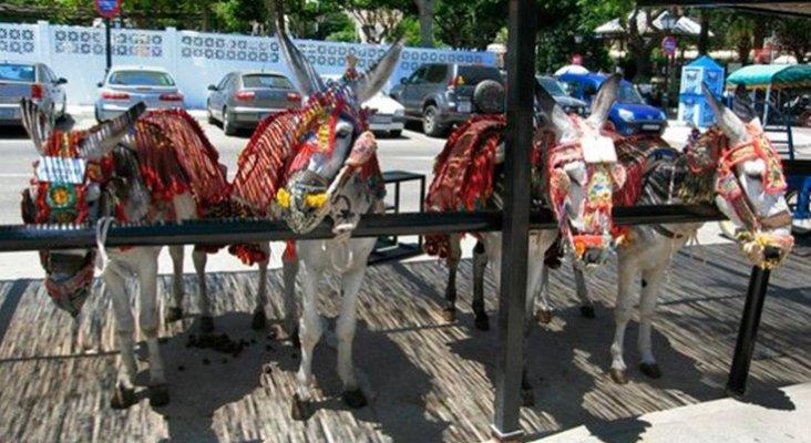 Los burros de Mijas (Málaga) no llevarán a turistas que pesen más de 80 kilos