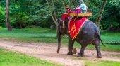 Ponen fin a los paseos sobre elefantes en Angkor Wat, Camboya