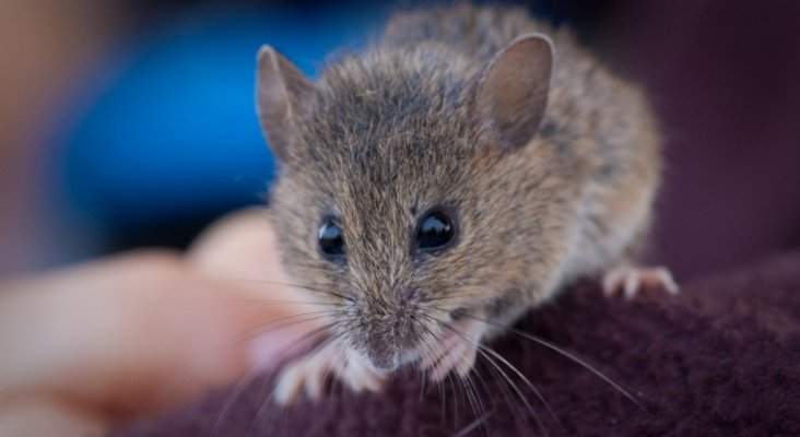 Encuentran a un ratón en un avión