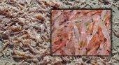 Hallan cientos de kilos de crustáceos muertos en una popular playa española | Foto: fuerteventuradigital.net