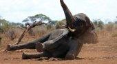Turistas matan a elefante protegido en Botsuana | Foto La Sexta