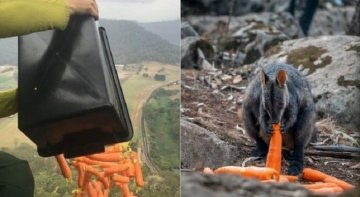 """""""Llueven"""" alimentos en Australia para garantizar la supervivencia de los animales   Foto: Matt Kian Twitter vía 20minutos"""