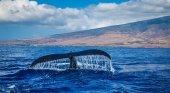 """Kiessling propone crear un """"santuario marino"""" para los mamíferos de la Macaronesia"""
