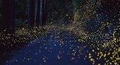 El turismo contribuye a la extinción de las luciérnagas | Foto: ok diario