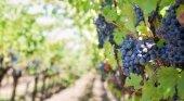 Chile quiere impulsar su turismo a través del vino