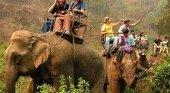 La pandemia fuerza la puesta en libertad de 78 elefantes en Tailandia | Foto: walac.pe