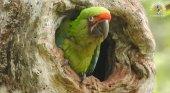 loro parque fundacion libera seis guacamayos en Ecuador