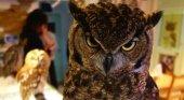 Los cafés de búhos proliferan en Japón