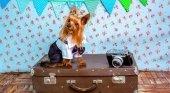 Los perros británicos no podrán viajar a la Unión Europea