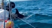 Preocupación por los ataques de orcas a veleros en costas gallegas Twitter (@SalvamentoGob)