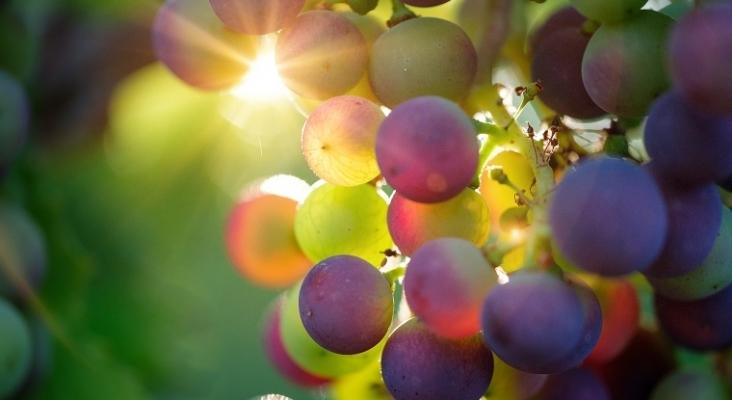 """Argentina y Chile se unen para crear """"La ruta del vino más larga del mundo"""""""