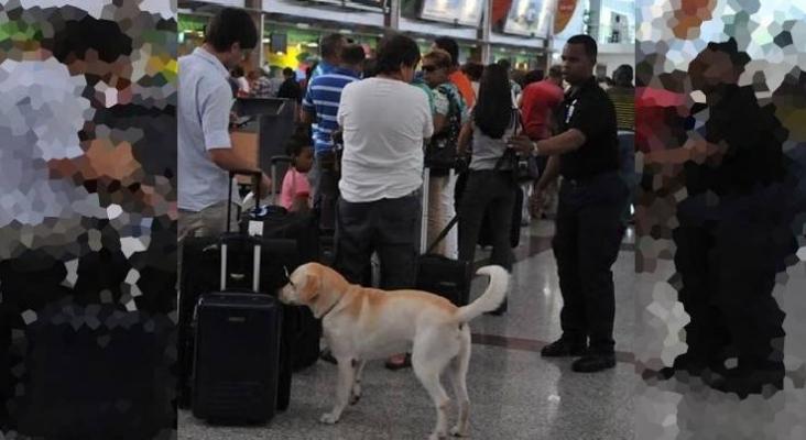 Tripulante de Air Europa sufre el ataque de perro antidrogas en el Aeropuerto de Santo Domingo | Foto: Unidad canina entre pasajeros Foto El Viajero Digital