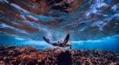 Un nuevo 'Eco proyecto' de 4 millones de dólares para preservar los arrecifes de coral