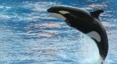 Virgin Holidays da la espalda a los parques con cetáceos