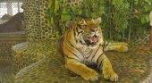"""Tigres maltratados para que """"sonrían"""" en las fotos"""