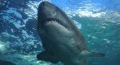Entre las especies que se hallan en el Mediterráneo se encuentra el tiburón blanco
