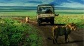 Las señales de precaución alertan de animales salvajes en las carreteras