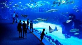Tras su reapertura en mayo, el acuario ha experimentado una gran acogida, tal y como aseguran desde la compañía. | Foto Poema Del Mar.