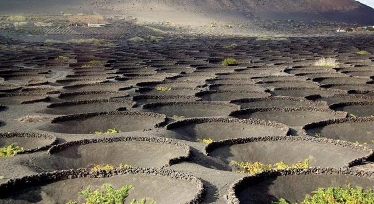 cultivos en suelo volcánico