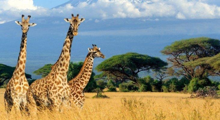 TUI vuelve a apostar por el safari y la playa en Kenia