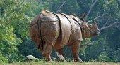 Guardas matan a 23 cazadores en un año para proteger a los rinocerontes