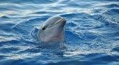 El destino de los delfines del zoo de Barcelona está en el aire