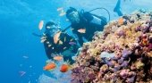 Pixies Garden, Gran Barrera de Coral