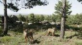 Lobos, de amenaza a atractivo turístico